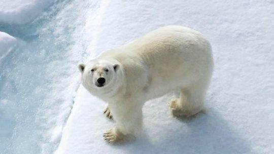 Ártico com Amyr e        Marina Klink